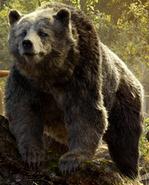 (2016) Baloo