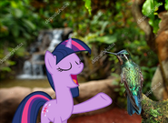 MLPCVTFB - Twilight Sparkle says for Bird Good morning, friend.