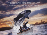 Opening to Free Willy 2: The Adventure Home 1995 Theater (Regal Cinemas)