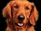 Duke (Bush's Baked Beans Dog)