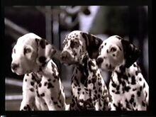 101 Dalmatians (Live Action) Teaser