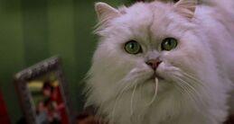 Stuart Little 1999 Trailer