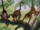 Monkeys (The Jungle Book)