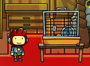 Maxwell and Hamster Cage