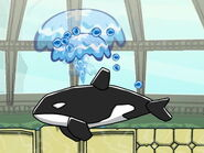 Orca shooting water