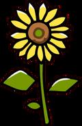 Sunflower-0
