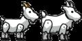 Goat vs Mountain Goat