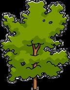 Ginkgotop