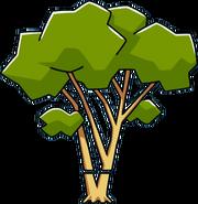 Eucalyptus Chopped
