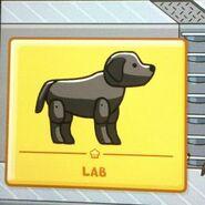 Black lab