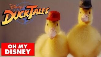 DuckTales Theme Song With Real Ducks Oh My Disney IRL