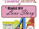 The Lovebird Jailbird