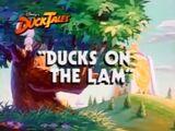 Ducks on the Lam
