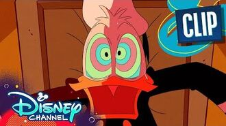 Why Donald Duck is Always Mad 😤 DuckTales Disney Channel