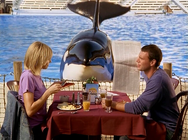File:3x3 Lunch in front of killer whale.jpg