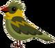 Swampglider