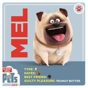 Mel Gallery The Secret Life Of Pets Wiki Fandom