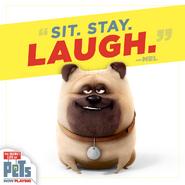 Sit Stay Laugh Mel