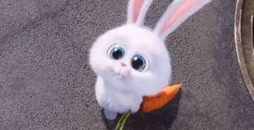 CuteAndYoungSnowball