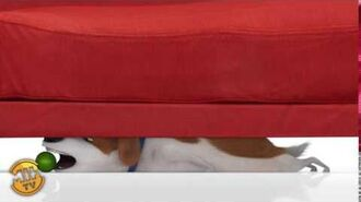 Max Under Couch - The Secret Life of Pets
