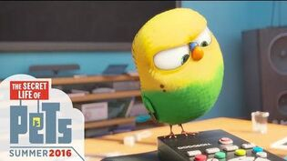 The Secret Life of Pets - Meet Sweet Pea (HD) - Illumination