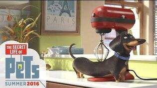 The Secret Life of Pets - Meet Buddy (HD) - Illumination