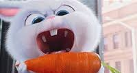 Snowball and His Carrot