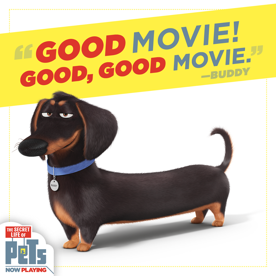 Image - Good Movie Buddy.png | The Secret Life of Pets ...