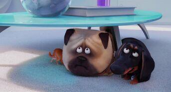 Secret-life-pets-disneyscreencaps.com-5117