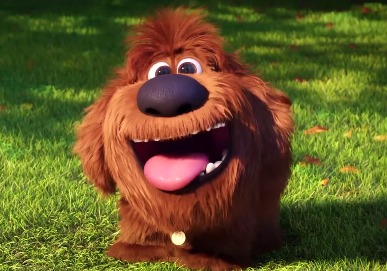 Nicknames of dogs and their significance in the life of pets