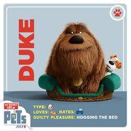 Duke card