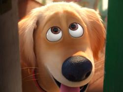 Dog bye