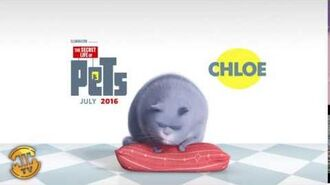Meet Chloe - The Secret Life of Pets