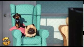 The Pets watch their favorite TV program - The Secret Life of Pets