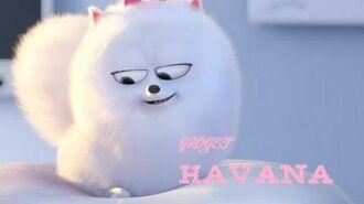 Gidget ~ HAVANA