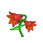 File:Grays Lily.png