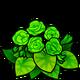 Green Begonia