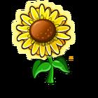 Vibrant Sunflower