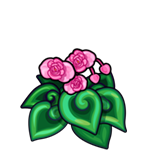 Pink Spiral Begonia