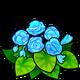 Blue Begonia