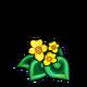 Yellow Spiral Begonia