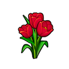 Ruby Red Tulip