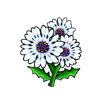 File:African Daisy.png
