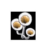 White Cup Mushroom
