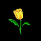 Common Yellow Tulip
