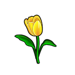Common Yellow Tulip