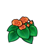 File:Orange Begonia.png