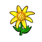Gold Star Daisy