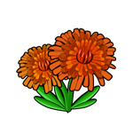 File:Mountain Daisy.png