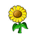 File:Large Sunflower.png